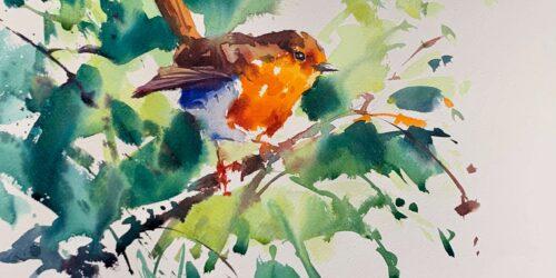 robin watercolour final
